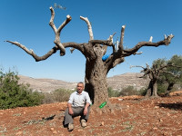 Palestinian farmer in Qaryut in front of his damaged olive trees